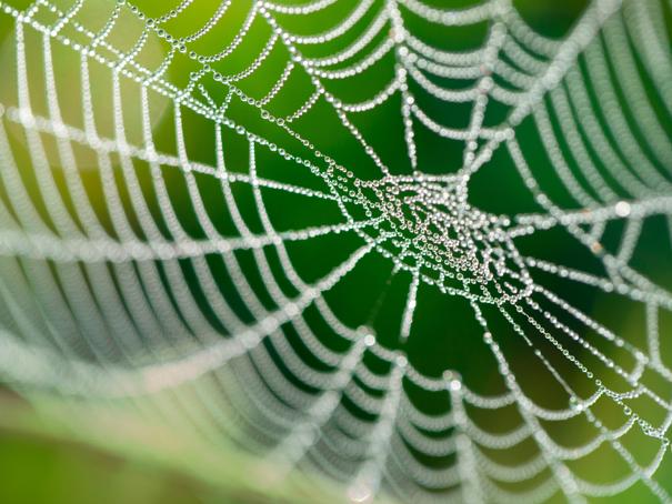 Hellen Grig / Shutterstock.com